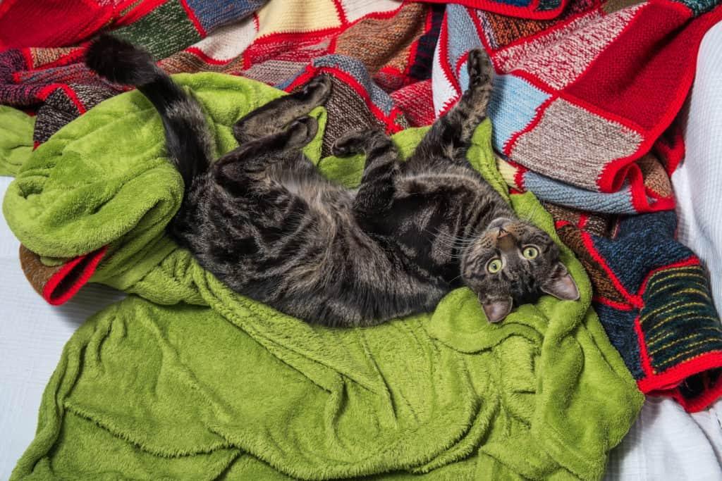 Paolo, der getigerte Kater, schläft auf einer grünen Decke