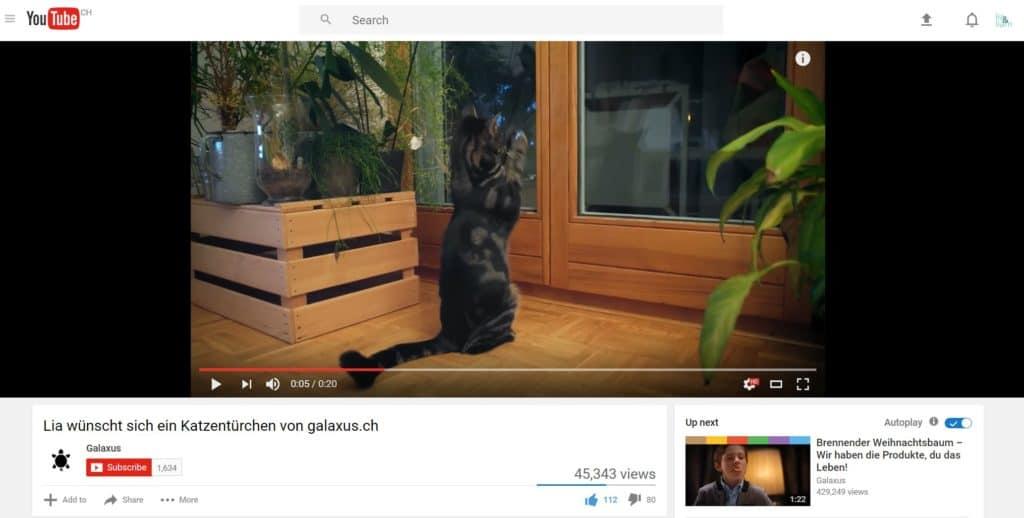Paolo, der getigerte Kater, in der YouTube Werbung