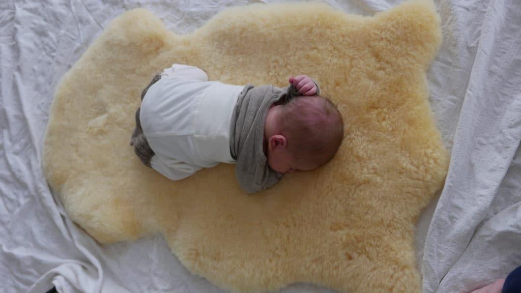 Die kleine Bohne auf seiner Schafwolle